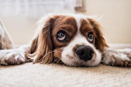 Dogoterapia, czyli terapeutyczne wykorzystanie kontaktu z psem